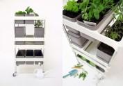 Apartment Garden: Nancy Wang
